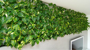 Комнатные растения фото: каталог, энциклопедия комнатных 27