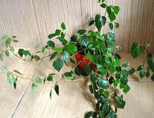 Комнатные растения фото: каталог, энциклопедия комнатных 82