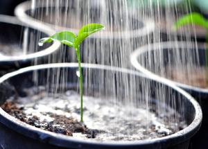 Как выращивать комнатные лимоны виды, выращивание и уход в домашних условиях, болезни и вредители