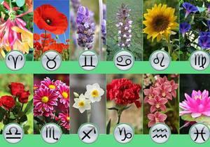 Гороскоп цветов по дате рождения