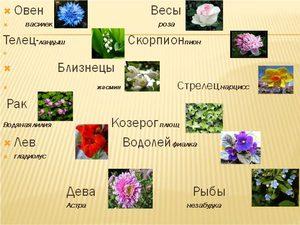 Гороскоп на май по цветам
