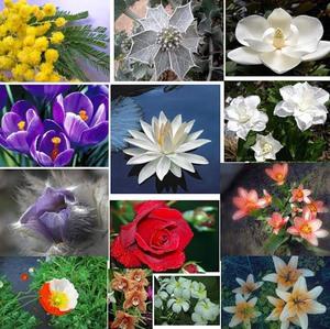 Знаки зодиака и цветы