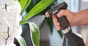 Советы флористов, как уберечь гиацинты от вредных факторов