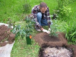Рекомендации опытных садоводов