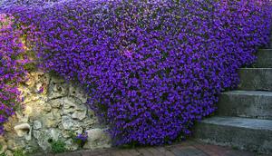 Когда сажают тюльпаны и лилии в грунт когда лучше сажать лилии