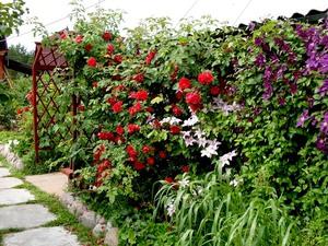 Лианы для сада - растения, которые могут украсить любое сооружение