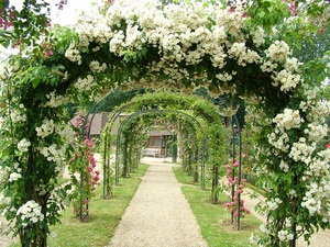 многолетние садовые высокие цветы фото и названия
