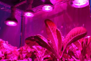 Что такое фитолампы и как они воздействуют на растения