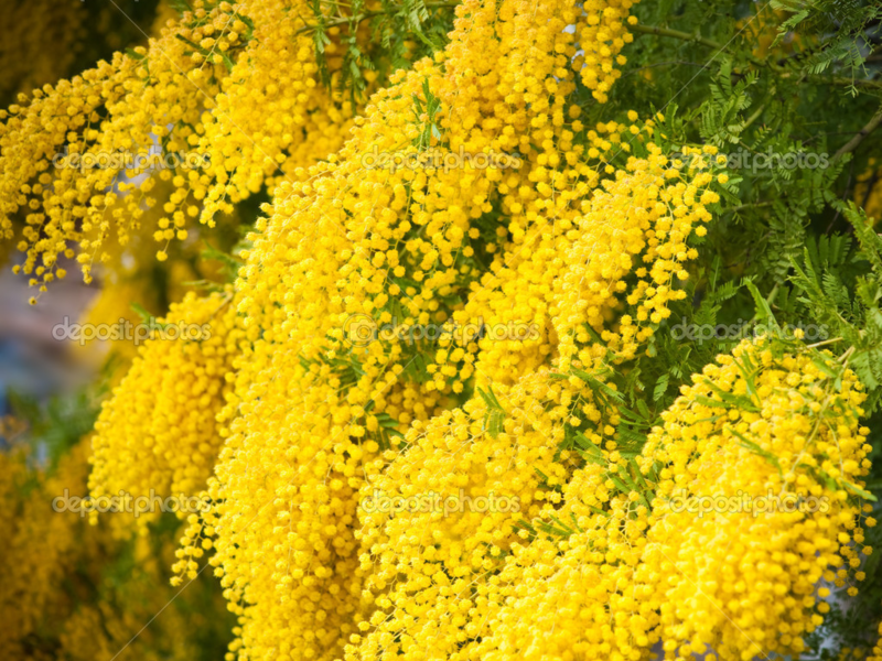 Цветок как дерево как называется