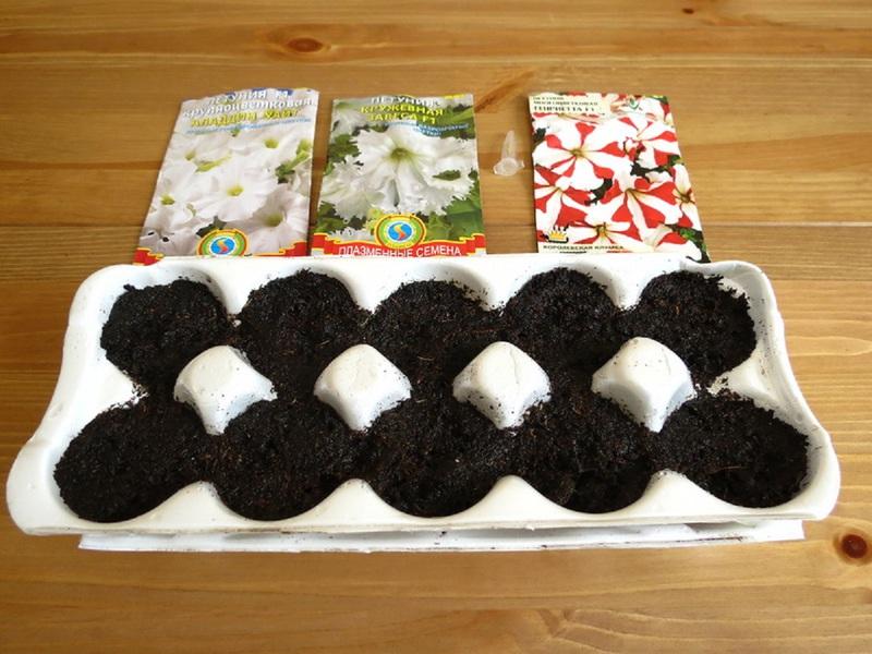 Как правильно выращивать петунии правила посева семян, когда пикировать рассаду после всходов,