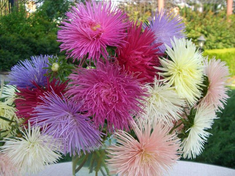 Растения для клумбы: цветы с 57