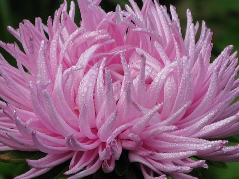 Растения для клумбы: цветы с 94