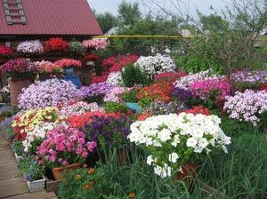Клумбы в саду для цветов фото