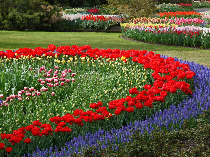 Низкорослые многолетние бордюрные цветы для