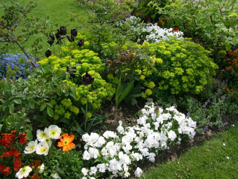 Низкорослые цветы цветущие все лето с фото