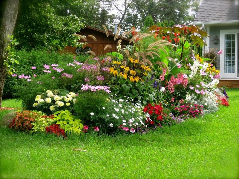 Бордюрные многолетние цветы цветущие все лето фото и название для