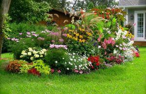Миксбордер из многолетних растений показан на фото
