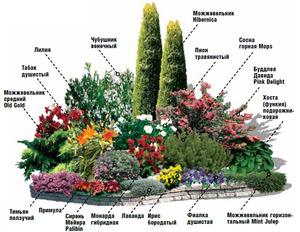 Схема миксбордера из многолетних растений - пример.