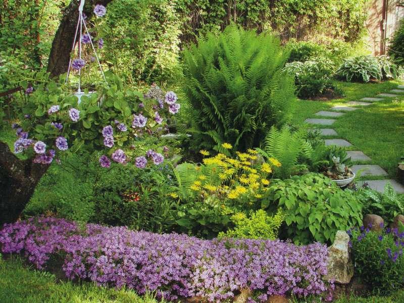 Пример миксбордера из многолетних и хвойных растений