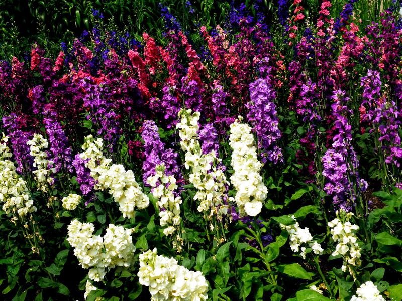 фото наперстянка цветок
