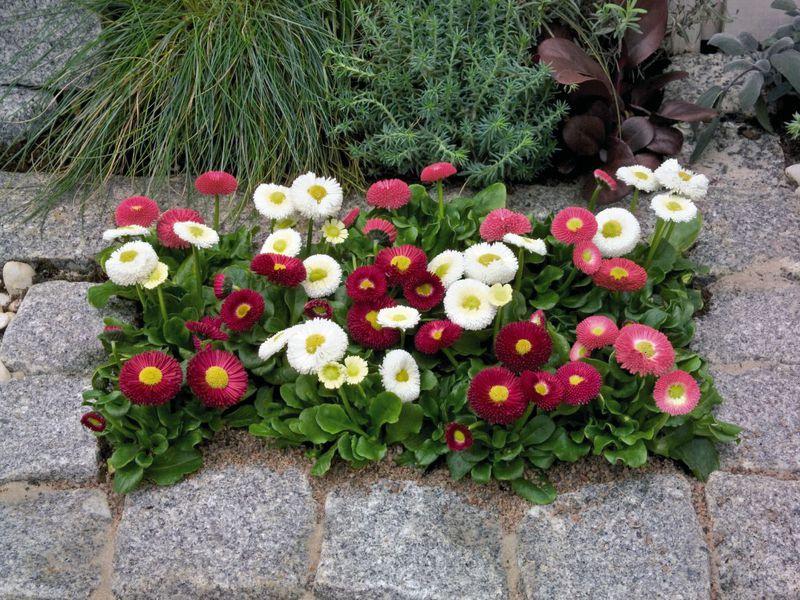 Цветы в клумбах