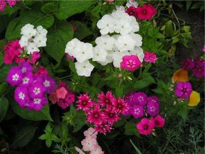 Живые цветы на клумбе фото и название многолетние