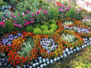Красивые цветы на клумбу и названия 80
