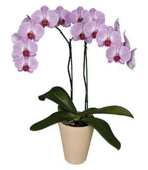Орхидеи разновидности фото с названиями