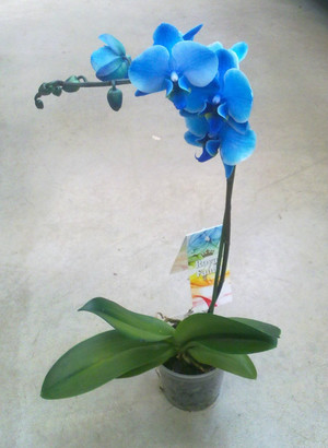 фото орхидей разновидности