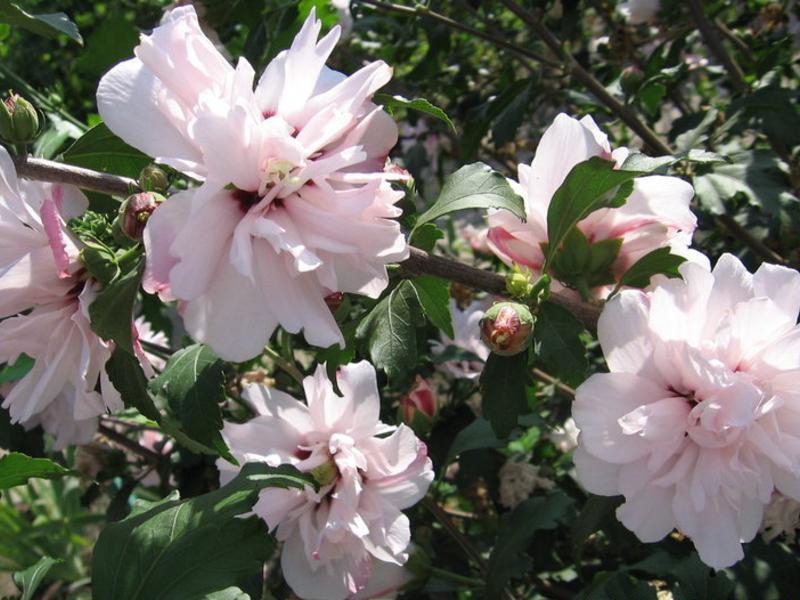 Какие бывают виды цветов названия и