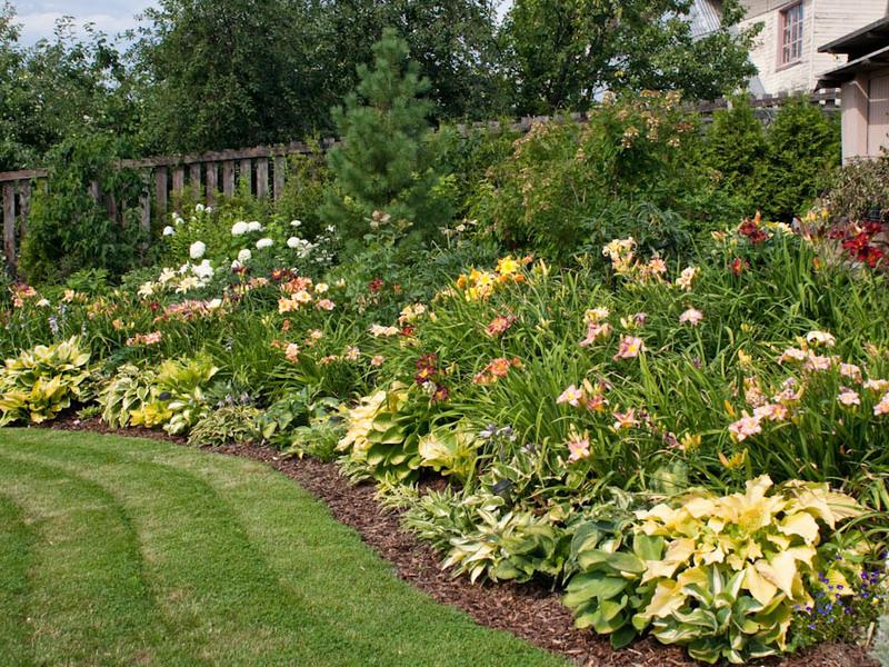 Хосты и лилейники в дизайне сада