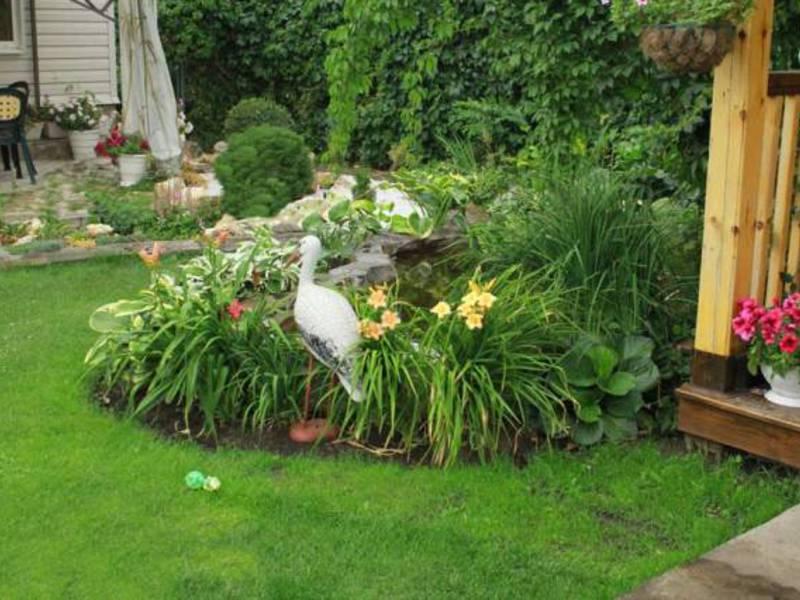 Лилейники и другие цветы
