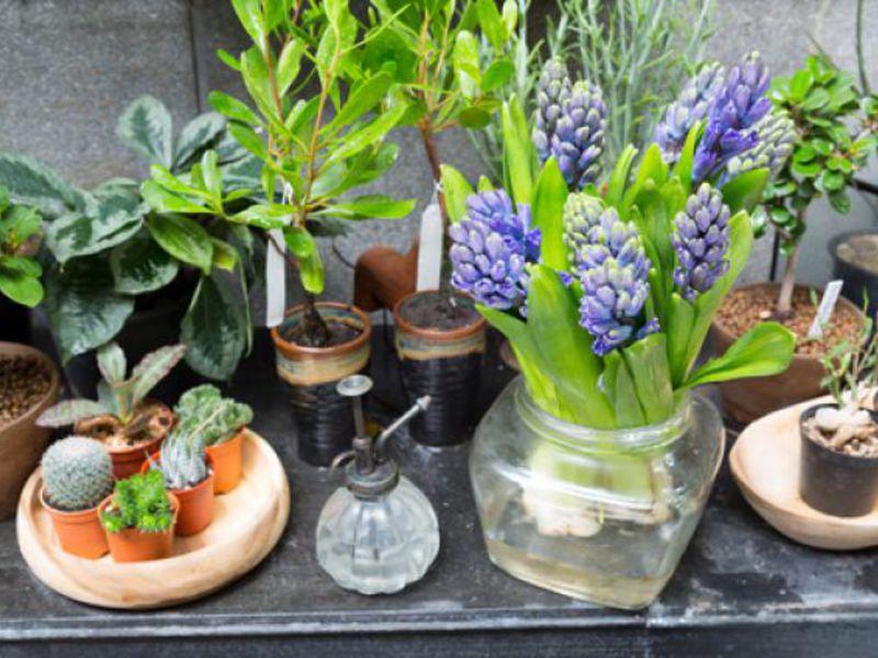 Зимний сад можно обустроить не только в доме, но и в небольшой квартире