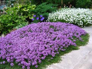 Почвопокровные растения - <u>почвопокровные растения и уход за ними</u> в чем их отличие от других видов?