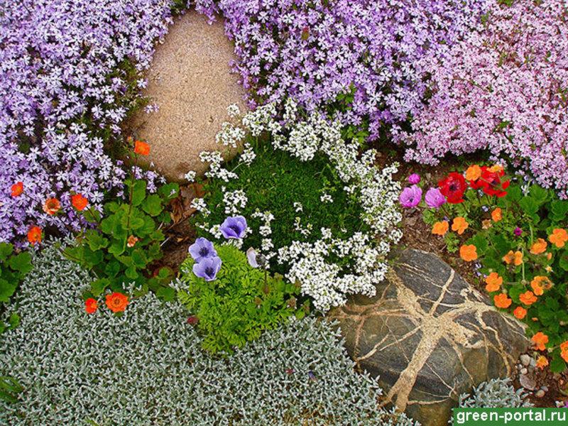 Почвопокровные цветы очень хорошо смотрятся в саду