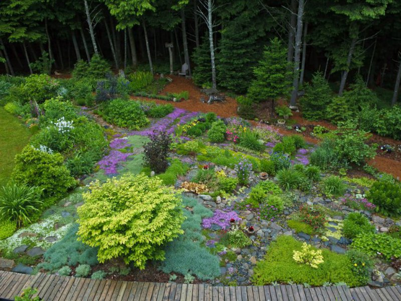 Почвопокровные растения помогут создать очень красивую клумбу.