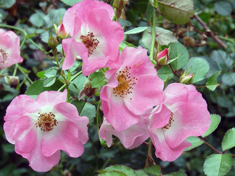 Цветущие дикорастущие цветы