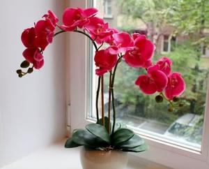 Как пересаживать цветущую орхидею в домашних условиях 482