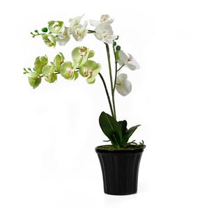 Орхидея декоративная станет украшением любого дома.