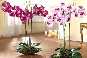 Орхидея - это прекрасный цветок, который очень любят за его красоту и экзотичность.