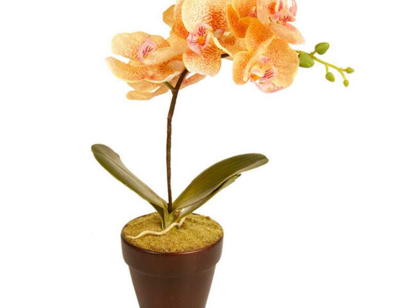 Цветок орхидея может расти в пластиковом или керамическом горшке.