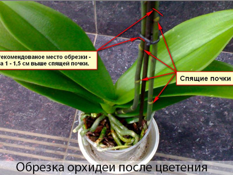 Уход за орхидеей требует определенных знаний.