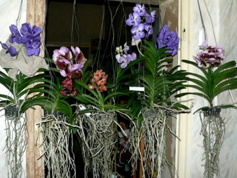 Уход за орхидеями очень важен, так как экзотические декоративные цветы подвержены разным болезням.
