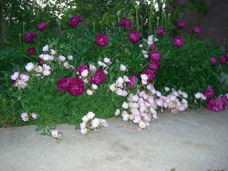 Цветы для сада названия фото