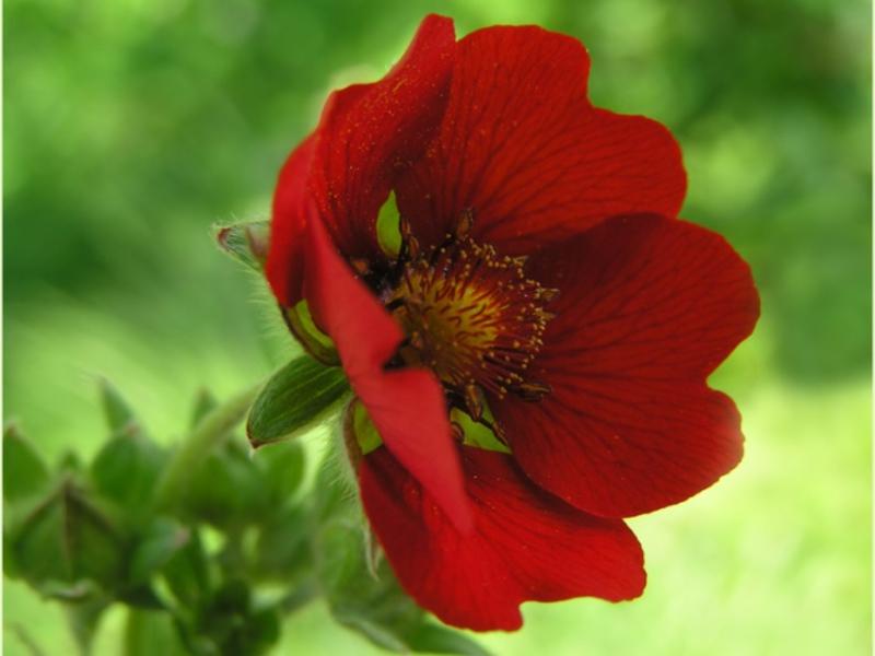 Красивый цветок для дома фото