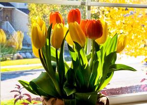 Как вырастить тюльпаны к 8 марта в домашних условиях подготовительные работы