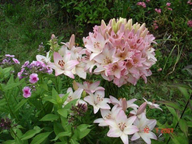 Черная роза из бисера мастер класс с пошаговым 24