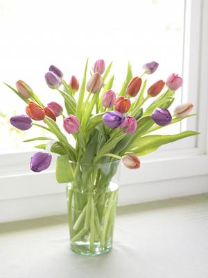 Хранение тюльпанов в срезанном виде