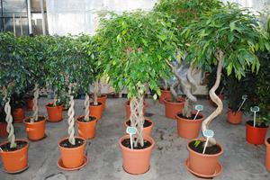 Комнатные горшечные растения