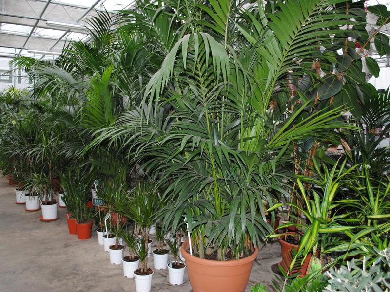 Выбор декоративнолиственных растений